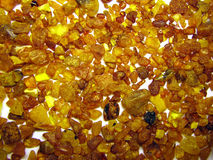 Amber. The gold amber from Lithuania cost Royalty Free Stock Image