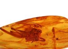 Amber Stock Image