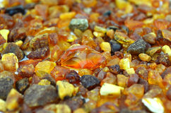 Amber from baltic sea Stock Photography