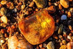 Amber on a beach of the Baltic Sea Royalty Free Stock Photography
