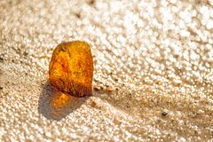 Amber on a beach of the Baltic Sea. In Poland Royalty Free Stock Photography