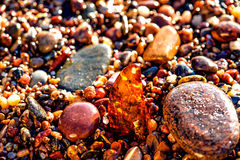 Amber on a beach of the Baltic Sea Royalty Free Stock Image