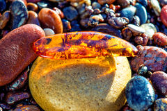 Amber on a beach of the Baltic Sea Stock Photography