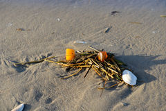 Amber on the beach Royalty Free Stock Photo