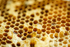 Amber  Bee honeycombs without bees Royalty Free Stock Images