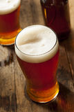 Amber Beer escura de refrescamento fresca fotografia de stock royalty free