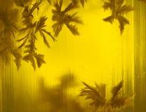 Amber bloem Royalty-vrije Stock Foto's