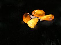 Amber earings. Polished hand made in Latvia - black background stock photo