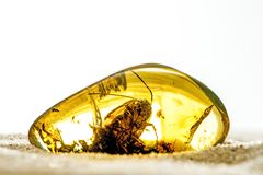 Amber with embedded beetle. Amber with embedded big beetle Royalty Free Stock Image