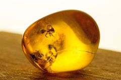 Amber with embedded insect. A closeup of the resin stock images