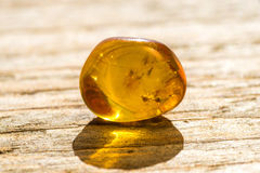 Amber with embedded insect Royalty Free Stock Images
