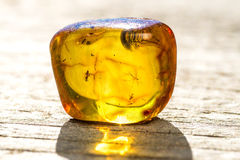 Amber with embedded insect Stock Images