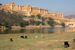 Amber Fort, near Jaipur (India) Stock Photos