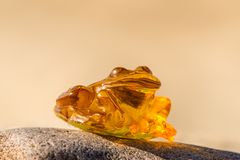 Amber frog on a beach of the Baltic Sea Stock Images