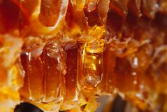 Amber honey in honeycombs flows down slowly yellow. Delicious juicy natural useful amber honey in honeycombs flows down slowly yellow Stock Photography