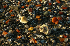 Amber In The Nature On Sea Coast Stock Image