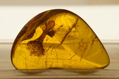 Amber with inclusion Stock Image