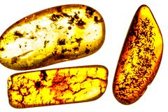 Amber with inclusions. On white background stock photo