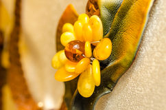 Amber jewelry. brooch made of leather and amber. Royalty Free Stock Photos