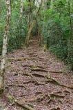 Amber Mountain National Park Madagascar Fotografering för Bildbyråer