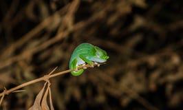 Amber Mountain National Park Madagascar Stock Afbeeldingen