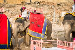 Amber Palace, Jaipur, Rajasthan state, India. JAIPUR, INDIA - JAN 19, 2016: Unidentified Indian man rides an elephant. Indian elephants used to be one of the stock photography