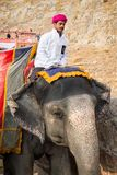 Amber Palace, Jaipur, Rajasthan state, India. JAIPUR, INDIA - JAN 19, 2016: Unidentified Indian man rides an elephant. Indian elephants used to be one of the stock photos