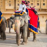 Amber Palace, Jaipur, Rajasthan state, India. JAIPUR, INDIA - JAN 19, 2016: Unidentified Indian man rides an elephant with tourists. Indian elephants used to be stock photos