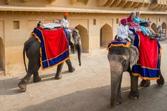 Amber Palace, Jaipur, Rajasthan state, India. JAIPUR, INDIA - JAN 19, 2016: Unidentified Indian man rides an elephant with tourists. Indian elephants used to be royalty free stock image