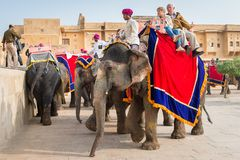 Amber Palace, Jaipur, Rajasthan state, India. JAIPUR, INDIA - JAN 19, 2016: Unidentified Indian man rides an elephant with tourists. Indian elephants used to be stock photography