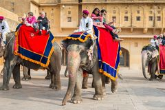 Amber Palace, Jaipur, Rajasthan state, India. JAIPUR, INDIA - JAN 19, 2016: Unidentified Indian man rides an elephant with tourists. Indian elephants used to be stock photo