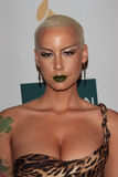 Amber Rose Royalty Free Stock Image
