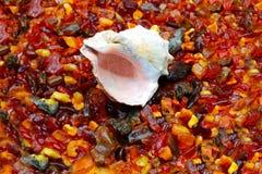 Amber and seashell Stock Photos