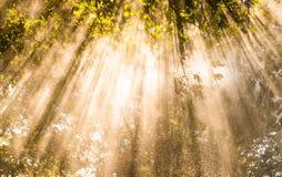 Amber shower sunbeam rain Royalty Free Stock Photo