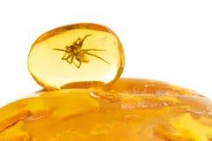 Amber Spider baltica Fotografie Stock Libere da Diritti