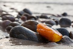 Amber stone on rocky beach. Precious gem, treasure. Royalty Free Stock Photography
