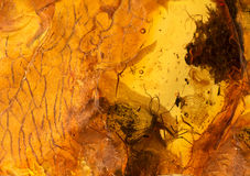 Amber stone texture. Amber stone with insect close up photo Stock Photo