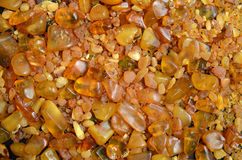 Amber stones from Baltic Sea Royalty Free Stock Photo