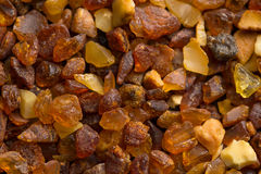 Amber stones from the beach of the Baltic Sea Royalty Free Stock Photos