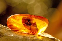 Amber in sun with inclusions. And blurred background royalty free stock image