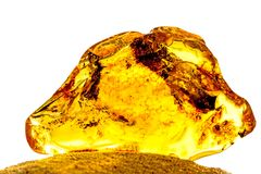 Amber in sun with inclusions. And white background Stock Image