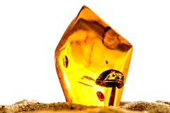 Amber in sun with inclusions. And white background Royalty Free Stock Photos