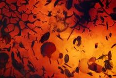 Amber textuur Royalty-vrije Stock Foto