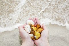 Amber. Three unique transparent piece of amber on the palm of the sea. Sunstone as a natural mineral on the beach. Amber glitter i. N the hand. Three amber of Stock Image