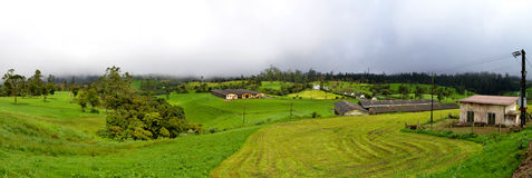 Ambewela Farm. Located in Sri Lanka Stock Image