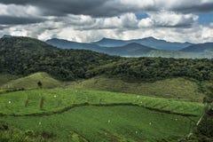Ambewela Nuwara Eliya Шри-Ланка стоковое изображение