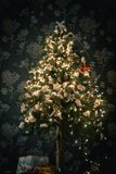 Ambient scene with Christmas tree on dark background Stock Photo