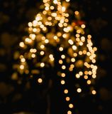 Ambient scene with Christmas tree on dark background Stock Photos