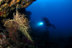 Underwater scene with diver Royalty Free Stock Photography