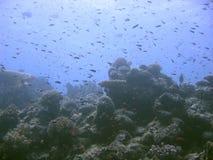 Ambiente blu Fotografia Stock Libera da Diritti